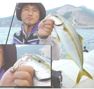 Photo of Yellow Tail Fish...Korean name is Boosiri Caught by Jake with Mister Twister  in Jordan