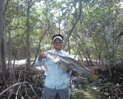 Photo of Snook Caught by Yang  with Mister Twister Exude™ 5