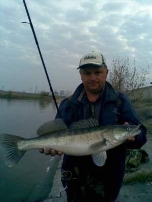 Photo of Walleye Caught by Sorin with Mister Twister Exude™ 4