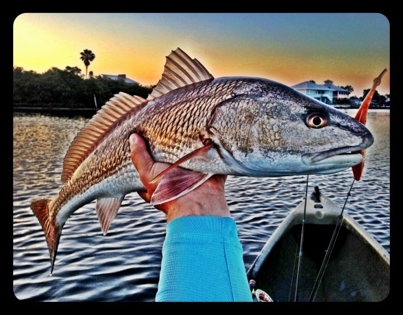 Photo of Redfish Caught by Patrick with Mister Twister Exude™ 5