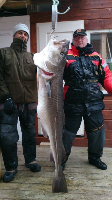 Photo of Cod Caught by Bert with Mister Twister 5